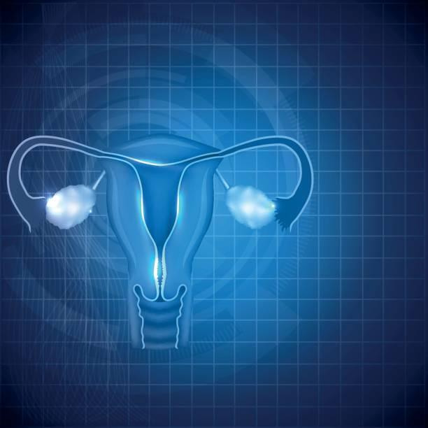 ilustraciones, imágenes clip art, dibujos animados e iconos de stock de ovarios, útero y fondo de sistema reproductor femenino - ovario
