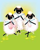Female sheeps busy knitting