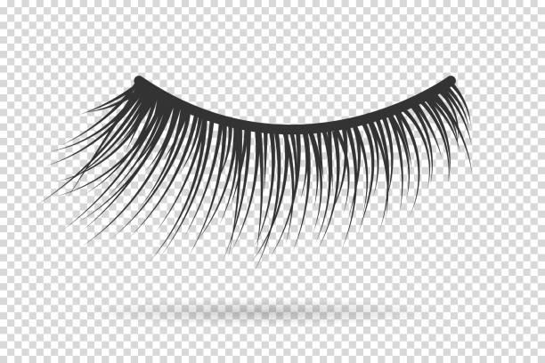 女性睫毛向量。假睫毛手畫。 - 睫毛 幅插畫檔、美工圖案、卡通及圖標