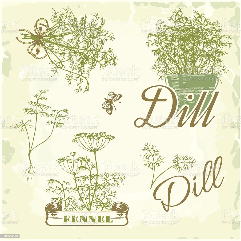 fennel, dill, herb, plant, royalty-free fennel dill herb plant stock vector art & more images of art