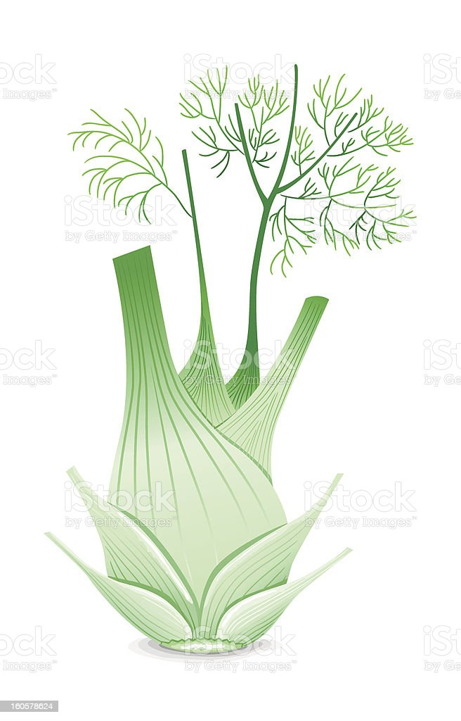 Fennel royalty-free stock vector art
