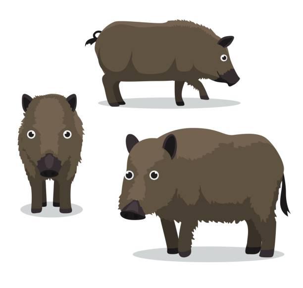 feral hog cartoon-vektor-illustration - schweinebraten stock-grafiken, -clipart, -cartoons und -symbole