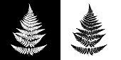 Fern Black-and-white vector image. Black fern silhouette isolated on white background and White fern silhouette isolated on black background.
