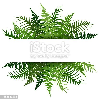 Fern frond tropical leaves frame vector illustration. Bush plant leaves decoration on white background. Green bracken new zealand fern tropical forest herbs, fern frond grass horizontal card border.