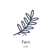 fern icon from nature outline collection. Thin line fern icon isolated on white background.