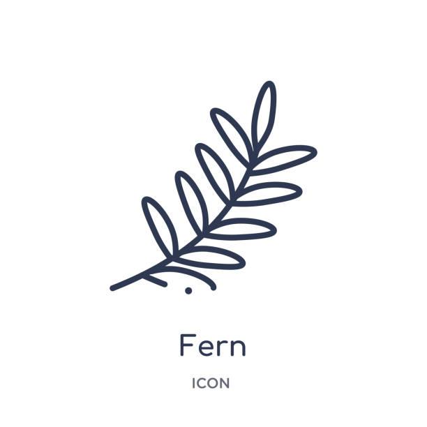 stockillustraties, clipart, cartoons en iconen met fern icoon van nature outline collectie. dun lijn varen icoon geïsoleerd op witte achtergrond. - varen