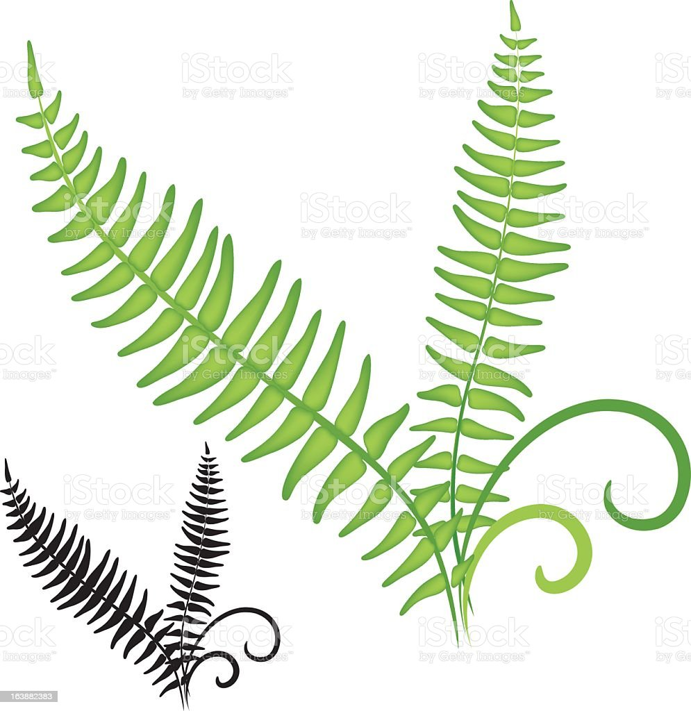 fern icon stock vector art more images of clip art 163882383 istock rh istockphoto com fern clipart black and white fern leaf clip art