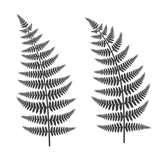 Fern Leaf Set Fern Leaf Set on White Background. Vector Illustration fern stock illustrations