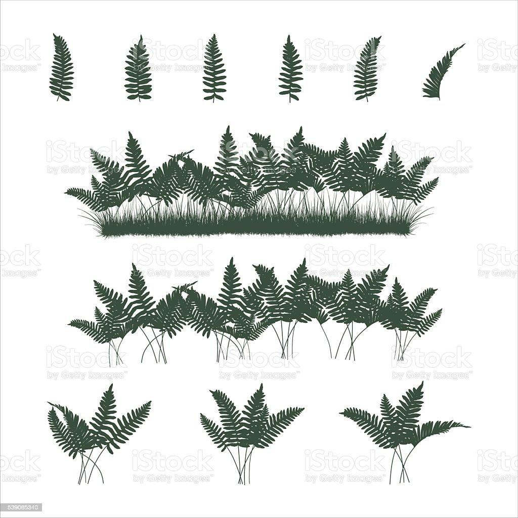 ferns set vector art illustration