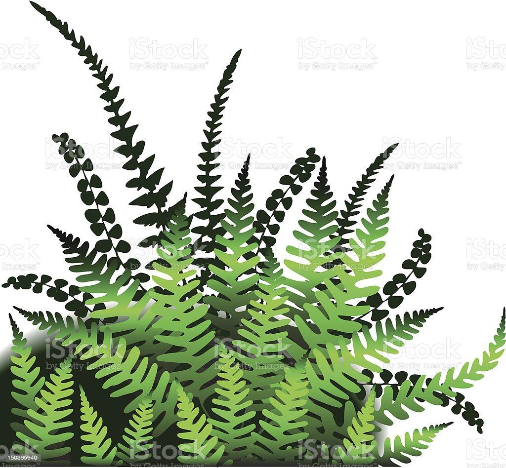 Ferns royalty-free stock vector art