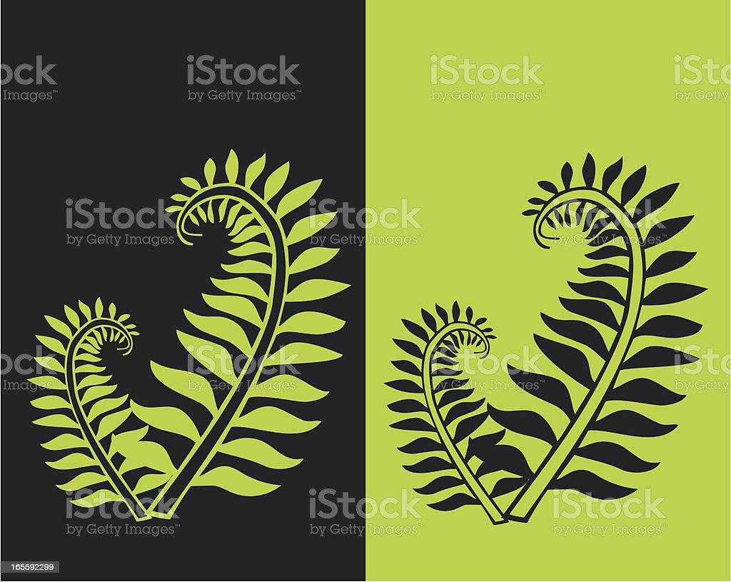 Ferns vector art illustration