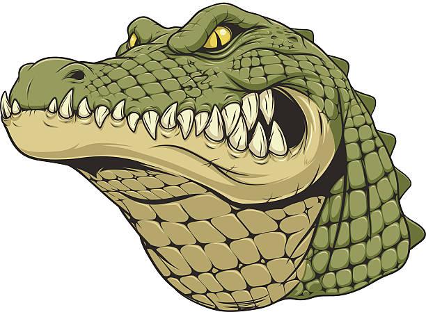 Ferocious alligator head .Vector illustration, a ferocious alligator head on a white background. alligator stock illustrations