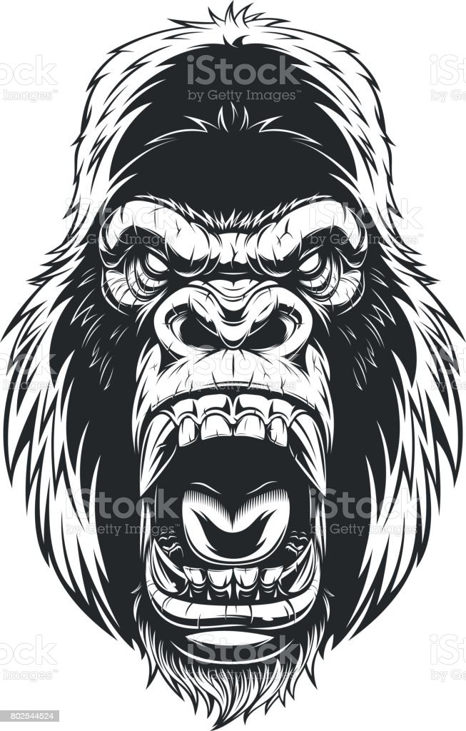 Ferocious gorilla head vector art illustration