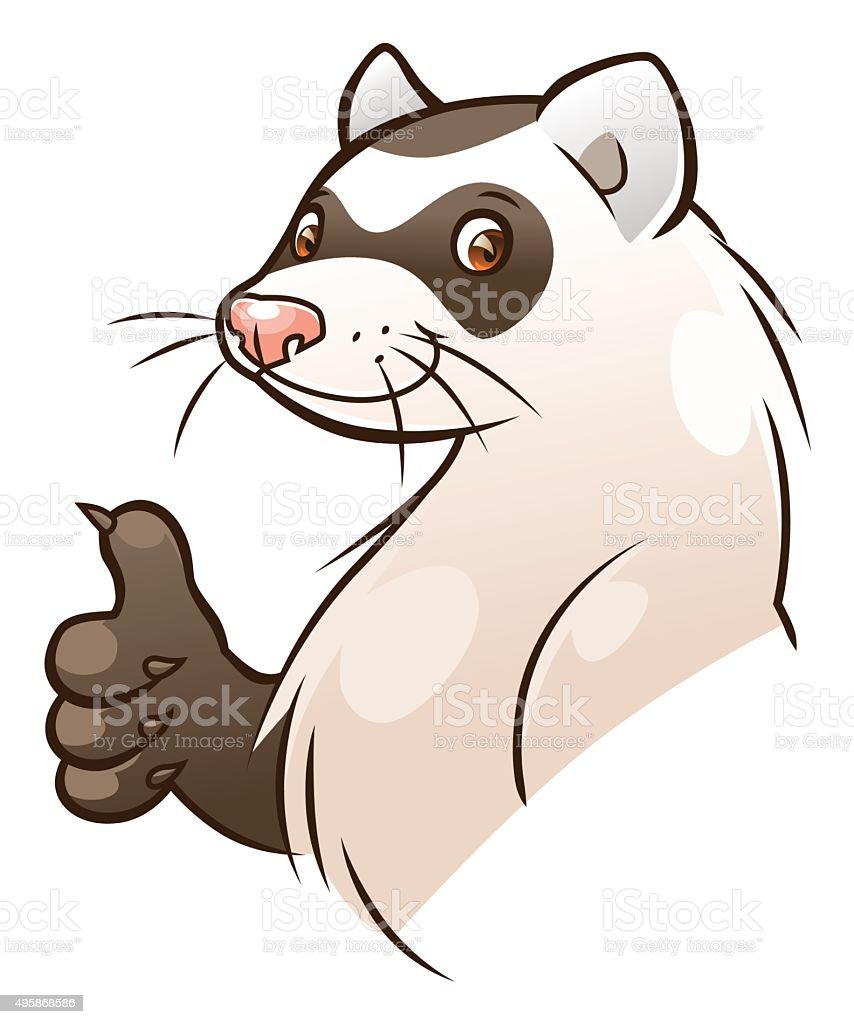royalty free ferret clip art vector images illustrations istock rh istockphoto com black footed ferret clipart ferret clipart black and white