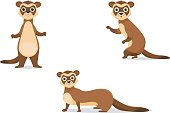 vector  ferret illustrations in different poses.