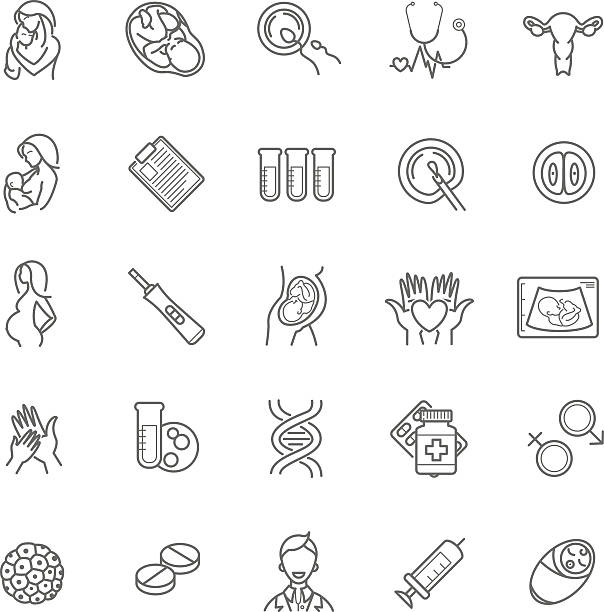 fertilization, pregnancy and motherhood vector icon set. Gynecol fertilization, pregnancy and motherhood vector icon set. Gynecology, childbirth healthcare thin line symbols for web design, layout, etc. fallopian tube stock illustrations