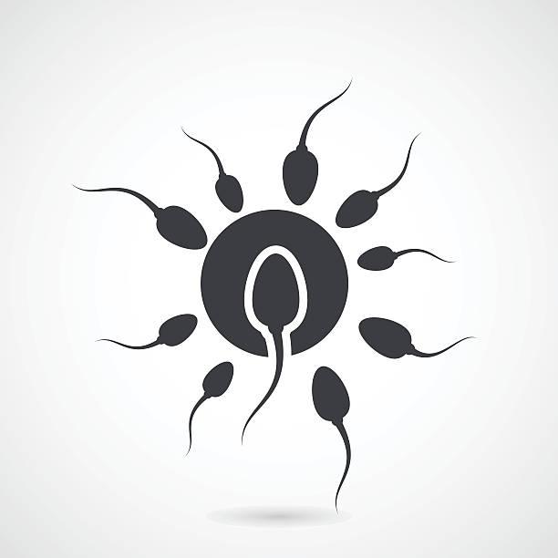 fertilized eizelle.-angriff spermatozoons und ei-zelle - eizelle stock-grafiken, -clipart, -cartoons und -symbole