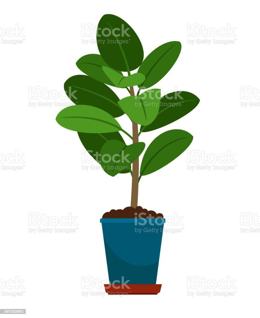 Ficus house plant in flower pot vector art illustration