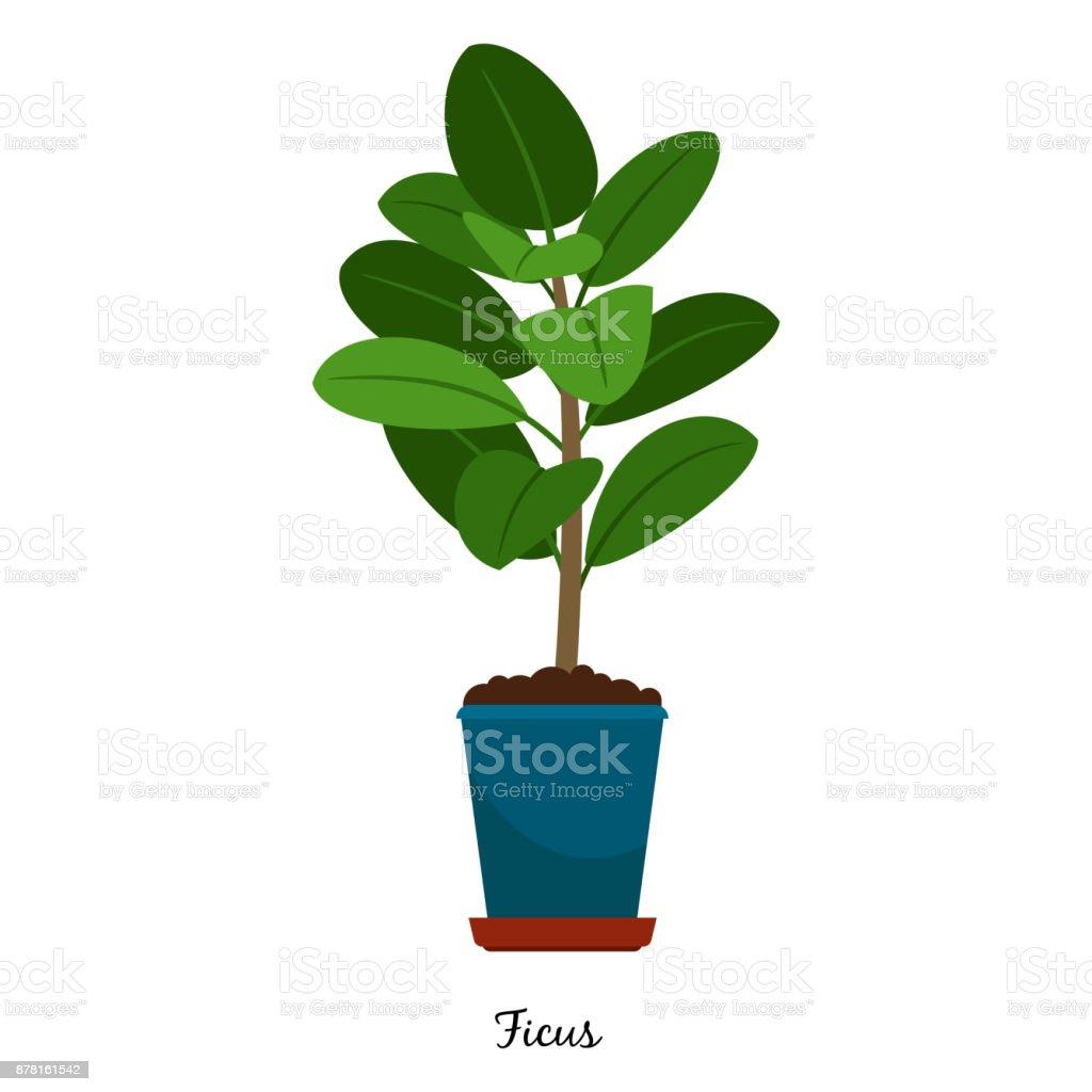 Ficus plant in pot vector art illustration