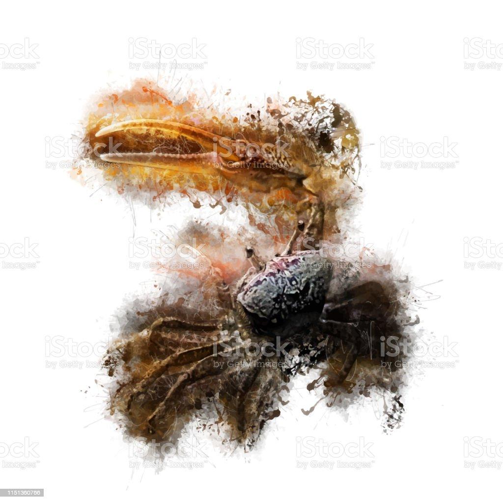 Fiddler Crab Stock Illustration - Download Image Now - iStock
