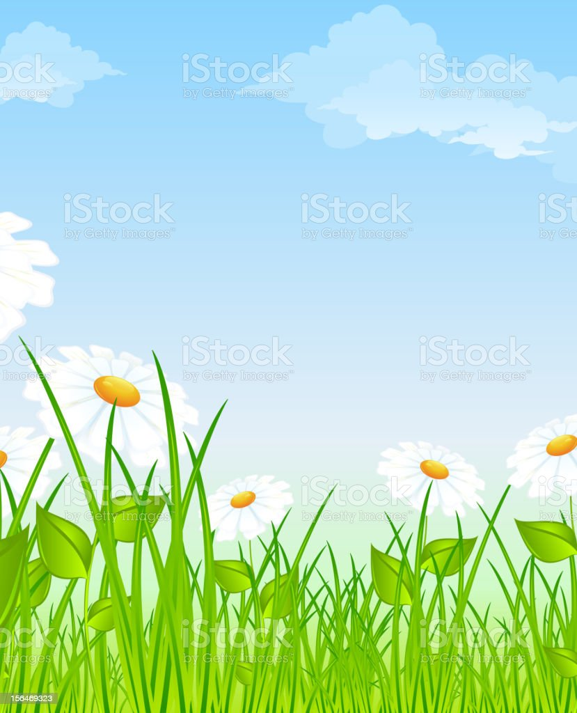 Field of daisies royalty-free stock vector art