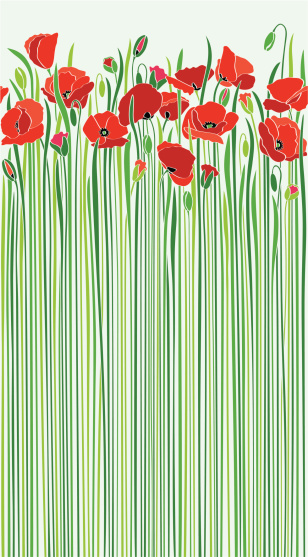 field of red poppies by the road in sunny spring