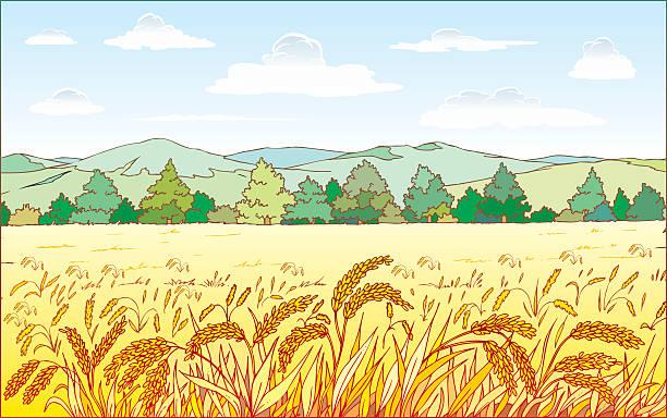 bereich der weizen - herbstgemüseanbau stock-grafiken, -clipart, -cartoons und -symbole