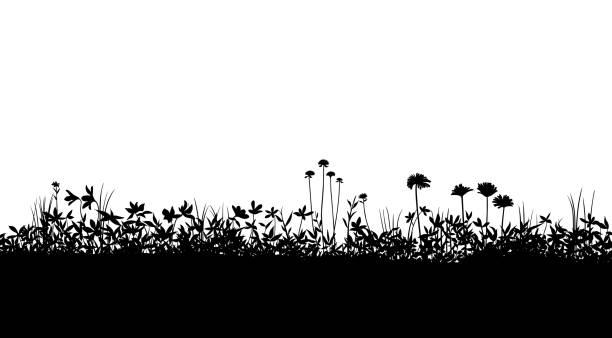 illustrations, cliparts, dessins animés et icônes de silhouette de champ matériel de fond, plante de floraison - plante sauvage