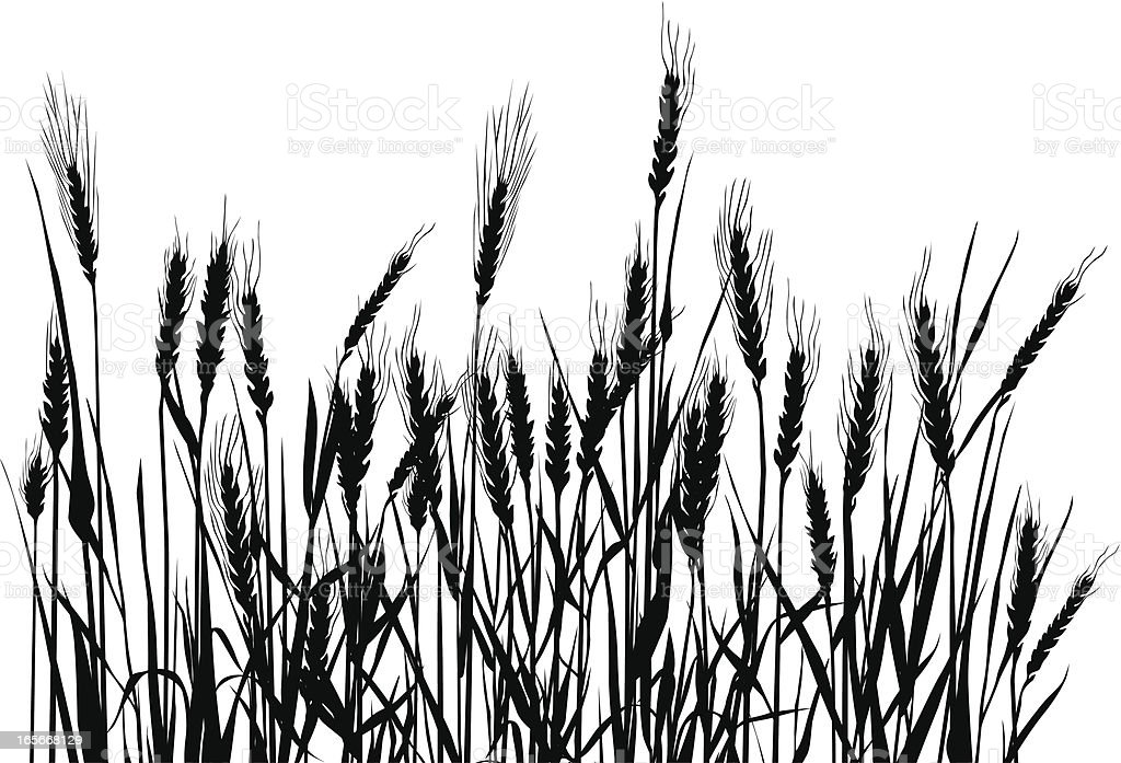 Field vector art illustration