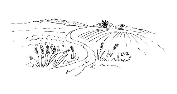 Field, wheat, crops, mill. Vector illustration. Sketch.