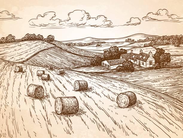 ilustraciones, imágenes clip art, dibujos animados e iconos de stock de campo con haystacks. - straw field