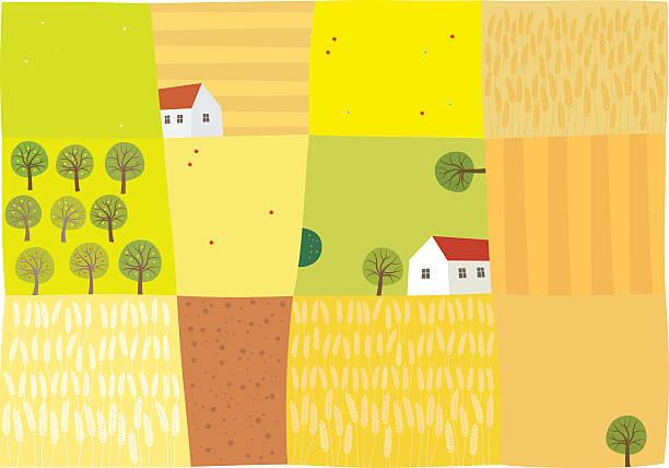 Fields to harvest Vector illustration corn crop stock illustrations