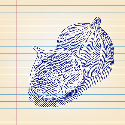 Fig Drawing on Lined paper
