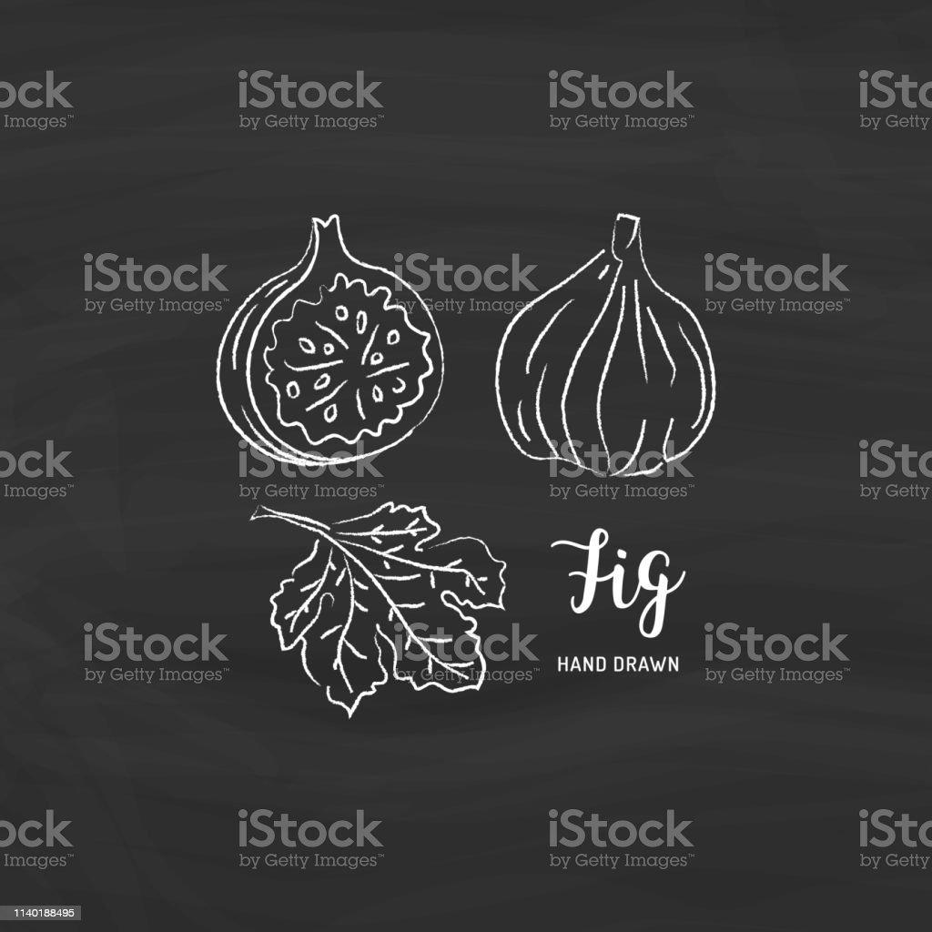 Fig fruit drawing. Sketch of fig fruit with chalk on blackboard....