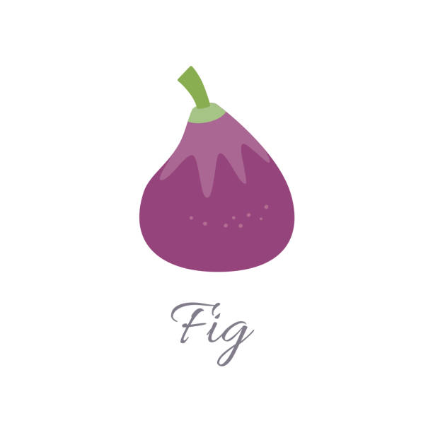 Fig icon with title Vector illustration of fig icon in flat style with title, isolated on white background fig stock illustrations