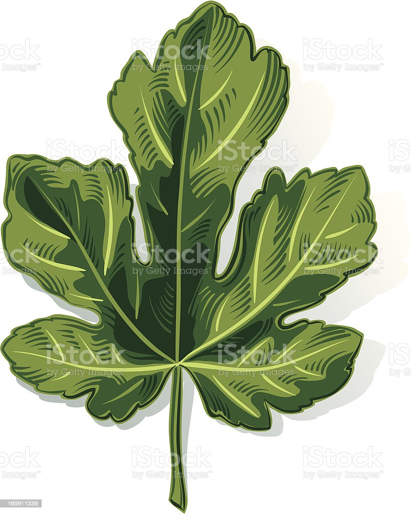 fig leaf stock vector art 165911339 istock