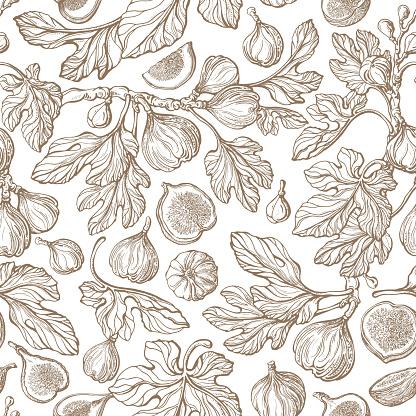 Fig seamless pattern Vector antiquity garden Print