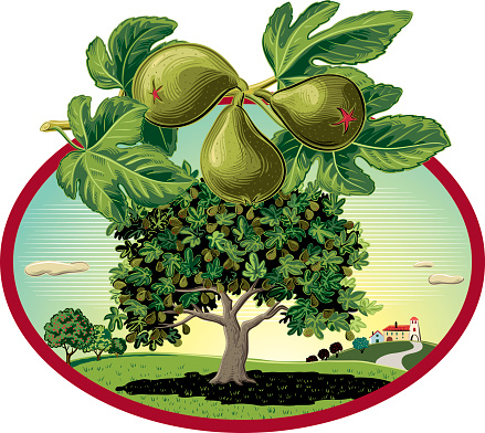 Fig tree in oval frame