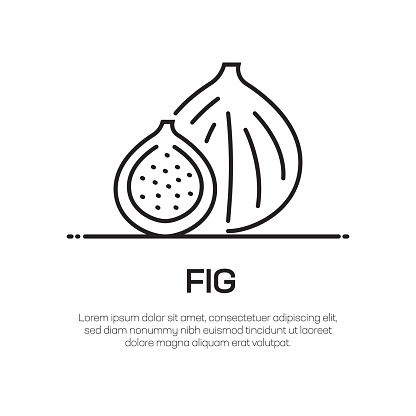 Fig Vector Line Icon - Simple Thin Line Icon, Premium Quality Design Element
