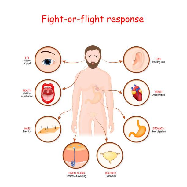 fight-or-flight response vector art illustration