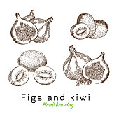 Figs and kiwi, vector hand drawing