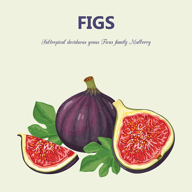 bildbanksillustrationer, clip art samt tecknat material och ikoner med figs - fikon
