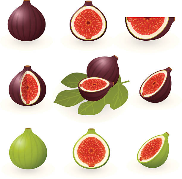 Figs  fig stock illustrations