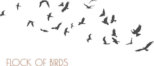 figures flock of flying birds on white background