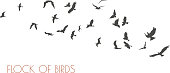 figures flock of flying birds on white background