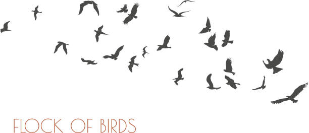 ilustrações de stock, clip art, desenhos animados e ícones de figures flock of flying birds on white background - pássaro