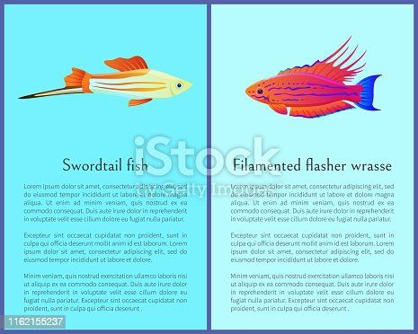 istock Filamented Flasher Wrasse and Swordtail Fish. 1162155237