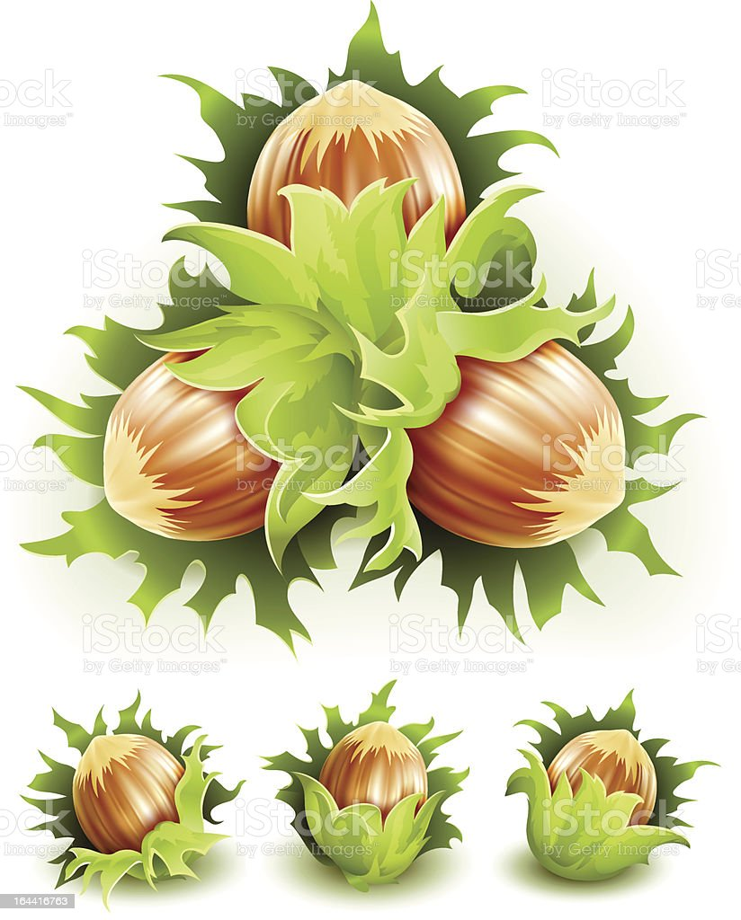 filbert nuts isolated on white royalty-free stock vector art