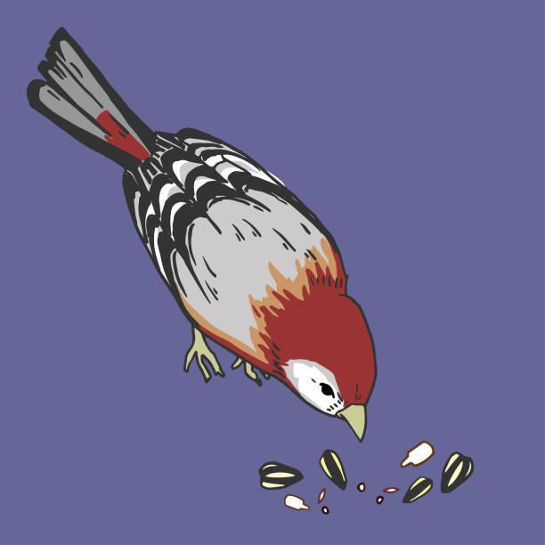 Finch vector art illustration