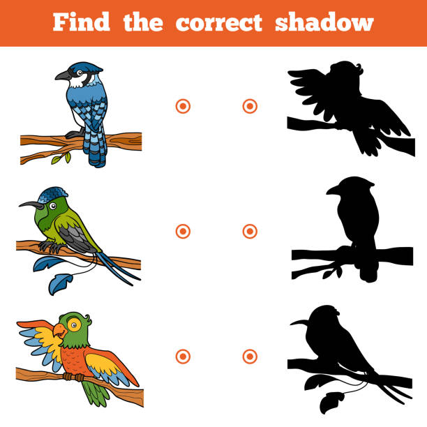 Find the correct shadow, game for children. Vector set of birds vector art illustration